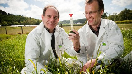 Американці хочуть виробляти біоетанол на Черкащині - фото 1