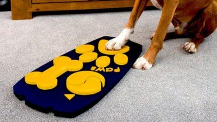 У Великобританії створили ТБ-пульт для собак - фото 1