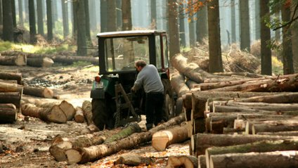 У Мінприроди створили нові правила вирубування лісів - фото 1