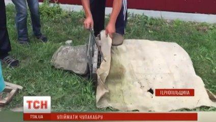 Жителі села Шманьківчики провели спецоперацію з ловлі чупакабри - фото 1