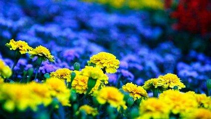 У Києві з'явиться найбільший квітковий прапор України - фото 1