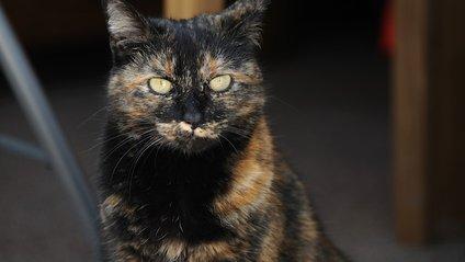 Кішка врятувала своїх господарів - фото 1