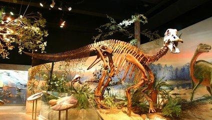Динозавр хворів на інфекційний артрит - фото 1
