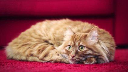 Котів використали для реклами авто - фото 1