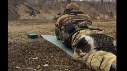 """""""Кіт-снайпер"""" оселився в зоні АТО - фото 1"""
