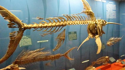 Скелет риби-меч - фото 1