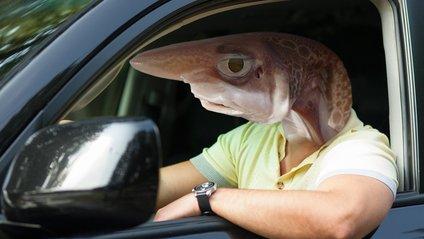 Водії-Риби найчастіше стають винуватцями ДТП - фото 1