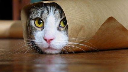 Як відео з котиками впливають на здоров'я - фото 1