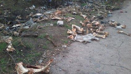 У Запоріжжі виявили звалище трупів тварин - фото 1