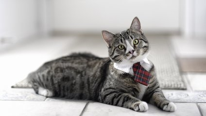 Компанія Alibaba запрошує на роботу кота - фото 1