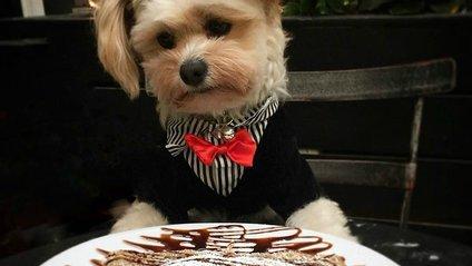 Бездомний пес підкорив Instagram і тепер їсть у найкращих закладах - фото 1