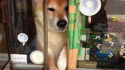 Смішний собака працює продавцем у кіоску - фото 1