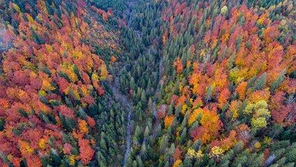 Карпати восени - фото 1
