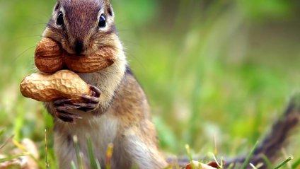 Учені винайшли засіб від алергії на арахіс - фото 1