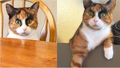 Кішка Лілі - фото 1
