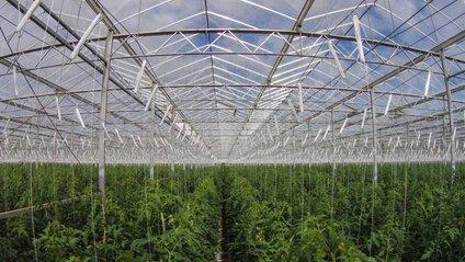 Вирощувати овочі в пустелі стало реальністю - фото 1