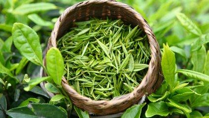 Зелений чай - фото 1