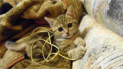 Навушники - фото 1