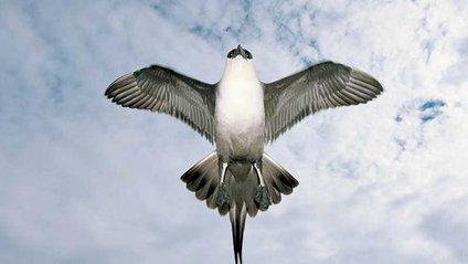 Птахи рятують людство від глобального потепління - фото 1