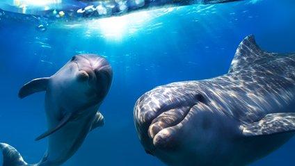 Дельфіни дають одне одному імена - фото 1