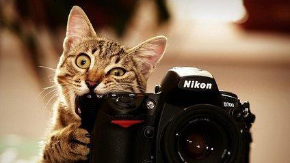 Фотографувати - фото 1