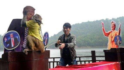 Мавпа Геда - фото 1