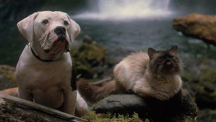 Кіт і пес - фото 1