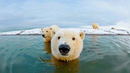 Арктика - фото 1