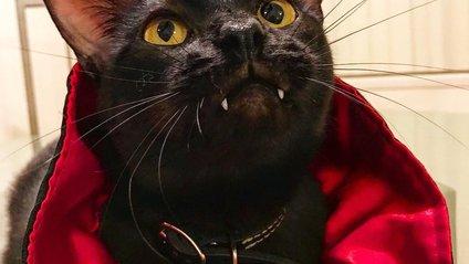 Кіт-дракула став зіркою мережі - фото 1