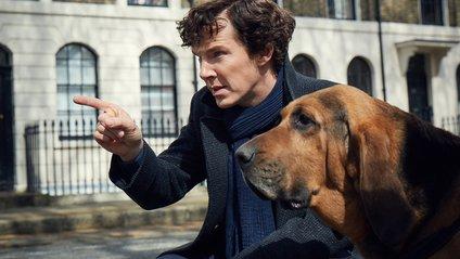 """Шерлок"" - фото 1"