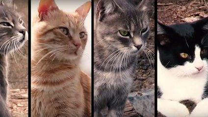 Як коти воюють в АТО - фото 1