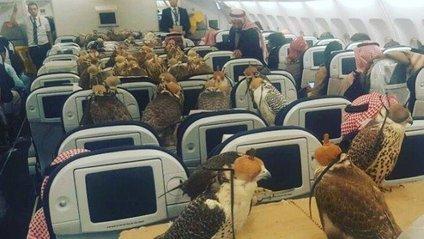 Арабський принц сів у літак зі зграєю з 80 яструбів - фото 1