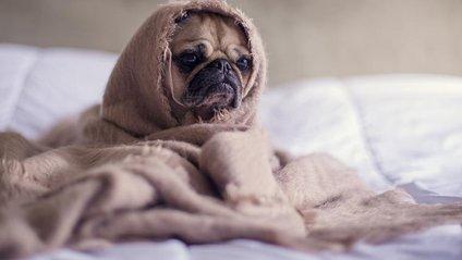 Вчені сказали, у яких людей виникають проблеми зі сном - фото 1