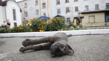 Вчені зробили неймовірне відкриття про котів - фото 1