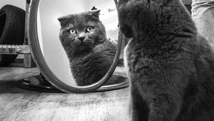 Кішки, які живуть поряд з людьми: унікальний фотопроект - фото 1