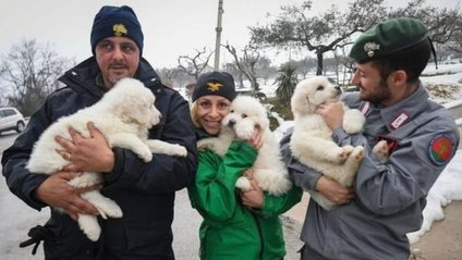 Рятувальники врятували трьох цуценят - фото 1