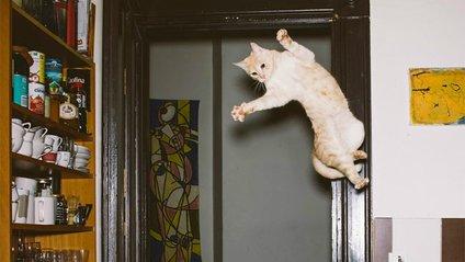 Кіт - фото 1