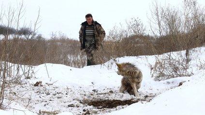 Полювання на вовків - фото 1