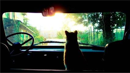 В машині - фото 1