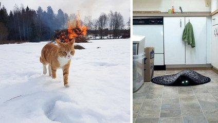 Фото, які підтверджують, що коти – демони - фото 1