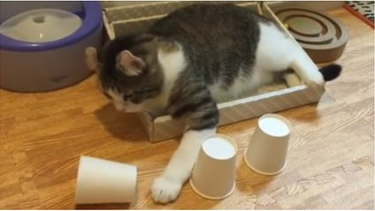 Кіт-розумаха - фото 1