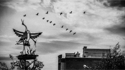Птахи - фото 1