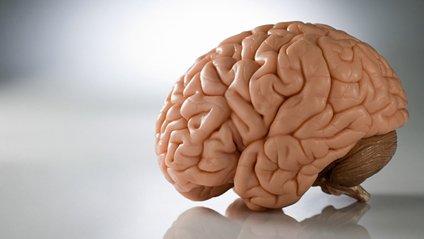 Мозок - фото 1