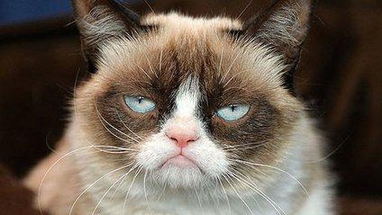 Кішка Грампі - фото 1
