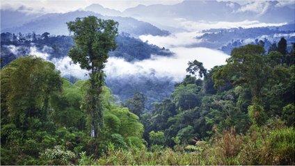 Амазонія - фото 1
