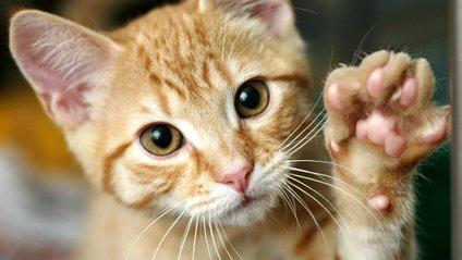 10 ознак того, що кіт вас любить - фото 1