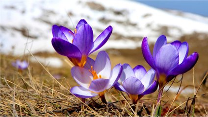 Весна - фото 1