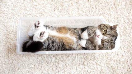 Обережно, няшність: як виглядає найпопулярніший кіт світу - фото 1