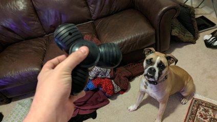 собака та фіджет-спіннер - фото 1