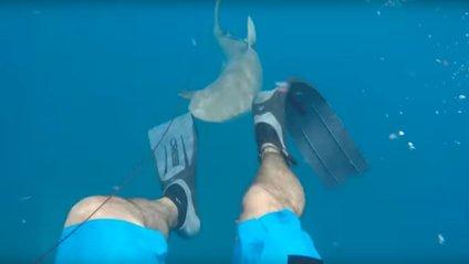 Американець зняв на відео напад акули - фото 1